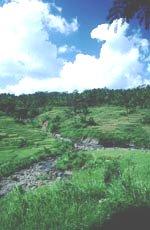 river in Jarkarta