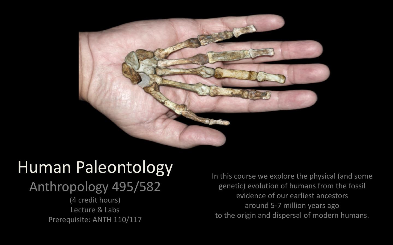 ANTH495_Paleoanthro