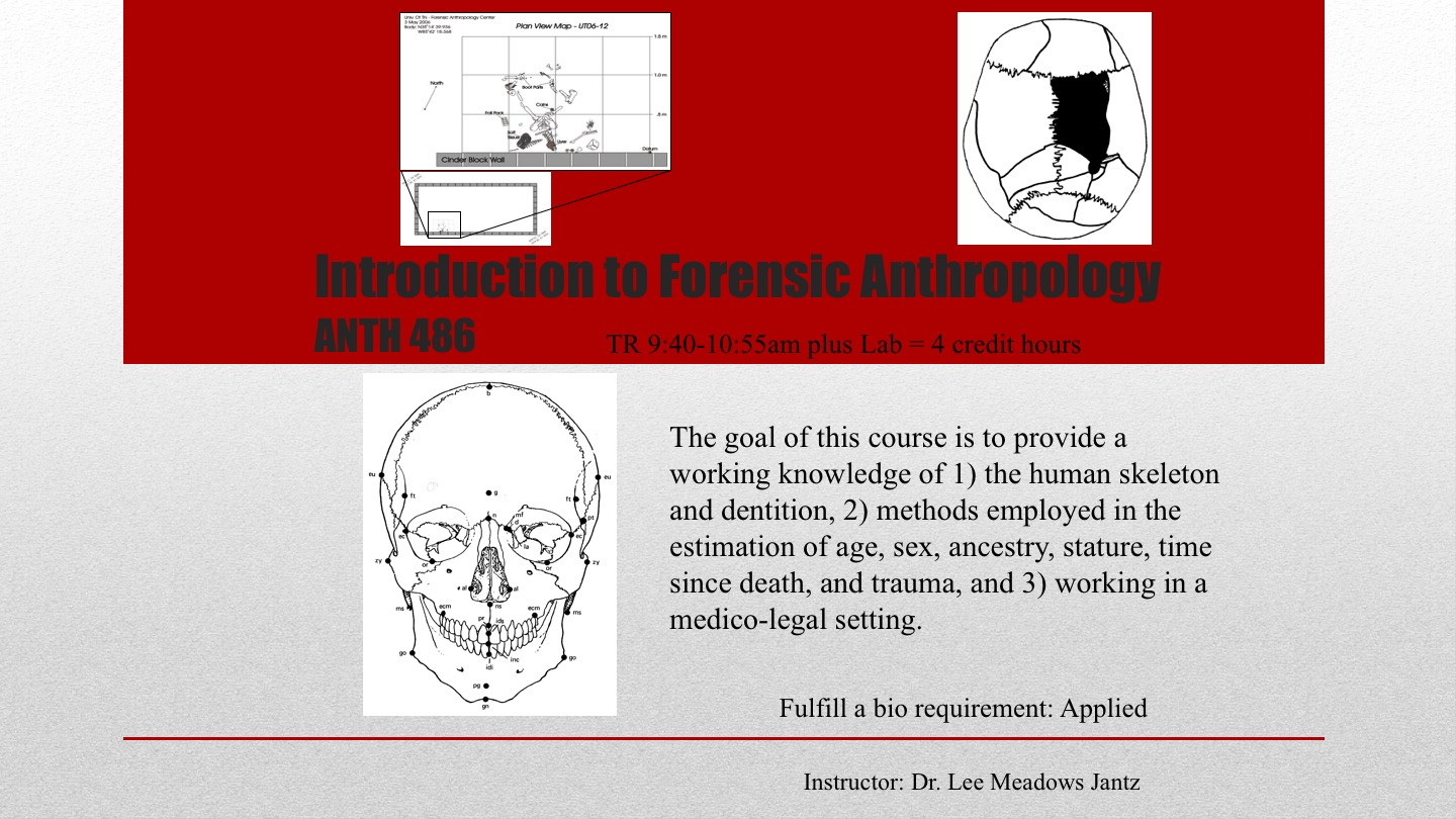 Introduction to Forensic Anthropology Jantz