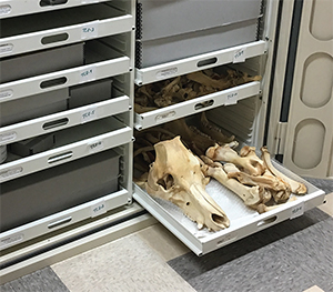 Bones in a drawer